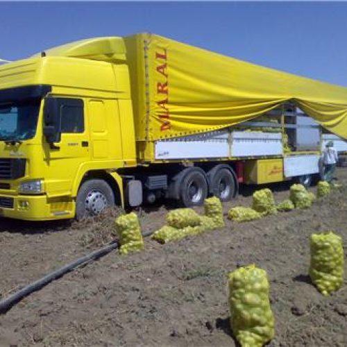 حمل و نقل بین المللی دی ترانس صبا , صادرات و واردات به صورت تخصصی